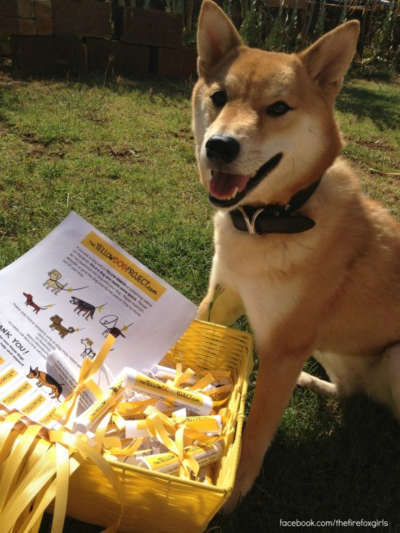 kuri-firefox-with-yellow-dog-project-ribbons