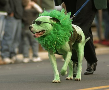 green-dog-st-patricks-day